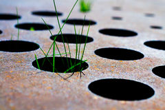 Grass in steel holes Stock Photography