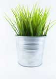 Grass in steel pot. Grass in stainless steel pot in isolated object style stock photo