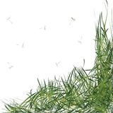 Grass with stems Royalty Free Stock Photo