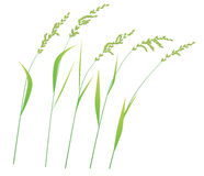 Grass stems in wind. Green grass stems in wind  on white, illustration Royalty Free Stock Photos