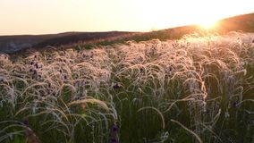 Grass in steppe swaying on wind stock footage