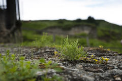Grass on a stone. Green grass grow on a grey stone stock images