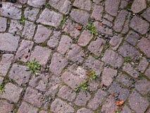 Grass through the stone pavement Stock Photo