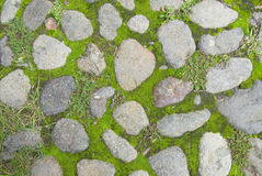 Grass and stone texture Stock Images