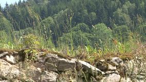 Grass on the stone wall in the background Forest stock footage