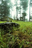 Grass and stones. Grass, stones, trees and haze in wood. Jizerske hory, Czech Republic Stock Photos