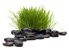 Grass and stones Royalty Free Stock Image