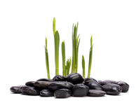 Grass and stones Royalty Free Stock Images