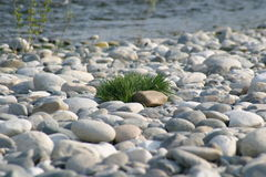 Grass on stones. A little piece of grass is growing trough stones royalty free stock photography
