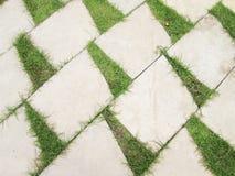 Grass between stones Stock Image