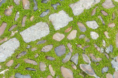 Grass and stones Royalty Free Stock Photography