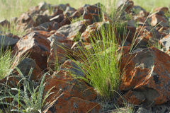 Grass and stones. Green grass and rock stones, summer time Stock Photo
