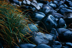 Grass & stones Royalty Free Stock Image