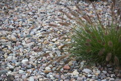 Grass On Stones Royalty Free Stock Images
