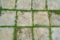 Grass between stones Stock Photos