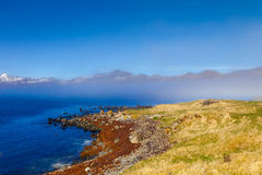 Grass on the stony coast of the fjord in the east of Iceland Royalty Free Stock Photo