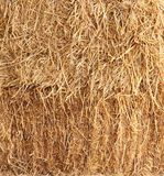 Grass straw background. Stock Photos