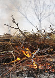 The grass, straw burns. Branches, straw, grass burn on a fire Royalty Free Stock Images