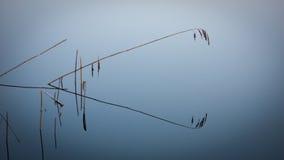 Grass straws in blue lake Royalty Free Stock Photos