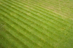 Grass stripes Royalty Free Stock Photography
