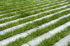 Grass stripes, raw Stock Image