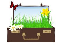 Grass in suitcase Stock Photo