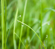 Grass in summer. Water droplets on a grass, shallow dof Stock Photography