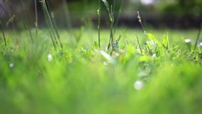 Grass on summer blurred background. Change focus. stock footage