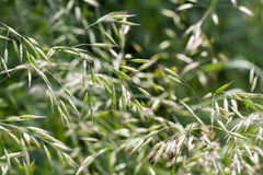 Grass in summer Stock Photography