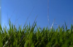 Grass. Summer relax green nature environment sky blue Royalty Free Stock Photos