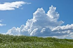 Grass and summer thunderhead Royalty Free Stock Images