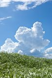 Grass and summer thunderhead. This is a picture of grass and thunderhead I have taken in August Stock Photo