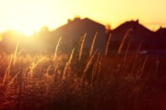 Grass in summer time against sunrise. Summer background. royalty free stock photography