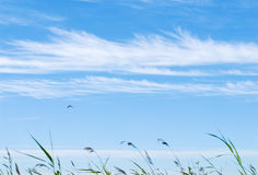 Grass in the summer wind Stock Photography