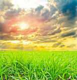 Grass with sun Stock Photography