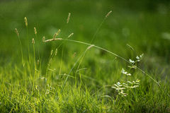 Grass in the sun Royalty Free Stock Image