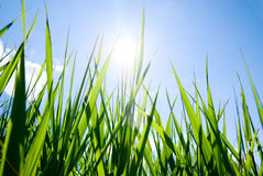 Grass and sun Royalty Free Stock Photos