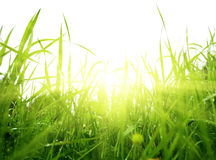 Grass and sun Royalty Free Stock Image