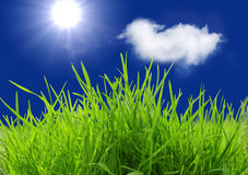 Grass and Sun Royalty Free Stock Photography