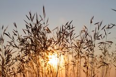Grass in the Sun Royalty Free Stock Photo