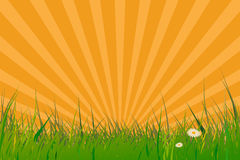 Grass with sun burst effect Royalty Free Stock Images