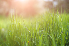 Grass and sun. Green texture of grass and sun stock image