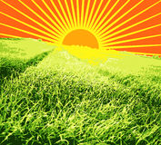 Grass and sun Stock Photos