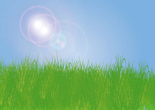 Grass with sun light Royalty Free Stock Photo