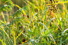 The grass with sun ray Stock Photography