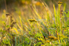 The grass with sun ray Royalty Free Stock Photo