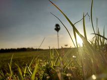 Grass. Sun rise image Royalty Free Stock Photography