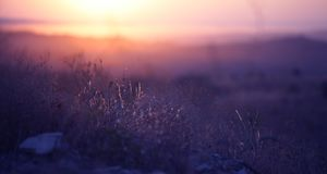 Grass in the sunlight Royalty Free Stock Photography