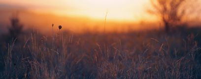 Grass in the sunlight Stock Photography
