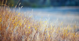 Grass in the sunlight Stock Image